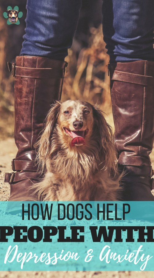 It is of no coincidence that dogs are man's best friend. The love they provide is unconditional. They can even help people that suffer from anxiety and depression to lead a happier life. There are many different ways that a dog can help you to cope. So, let's take a look at how dogs help with anxiety and depression.