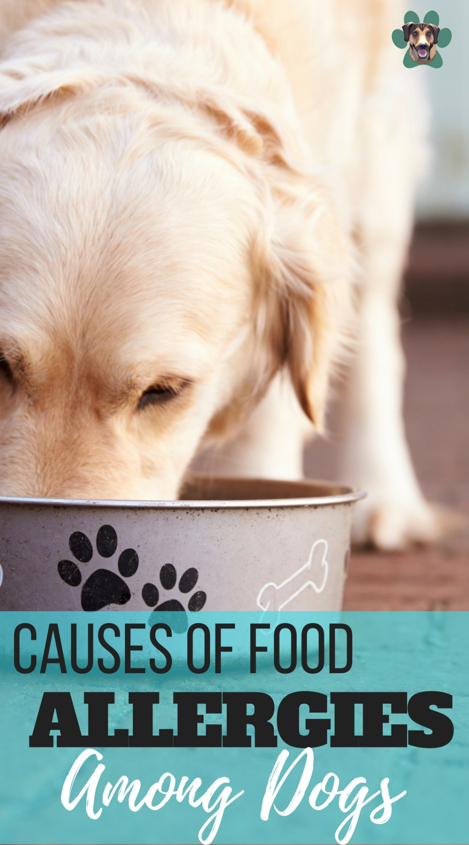 We have battled food and environmental allergies with my dog, Ryder for years now. Save yourself the heartache and your pup the pain. Look at their food's list of ingredients and try to determine what causes their reaction. Today we are going to talk about the top five most common culprits of dog food allergies.