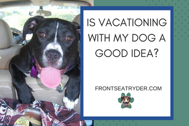 Is Vacationing With My Dog A Good Idea?