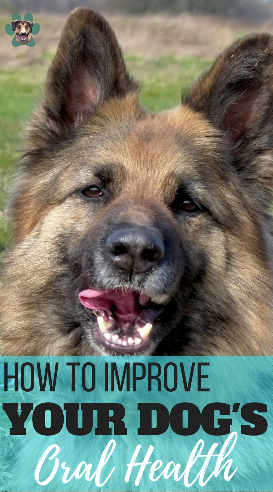 Your dog uses their mouth as their hands. They are constantly in and out of things. Biting, chewing, playing. Keeping their teeth healthy is vital. But we have already talked about the importance of good oral health for your dog. Here are a few easy ways to improve your dog\'s oral health.