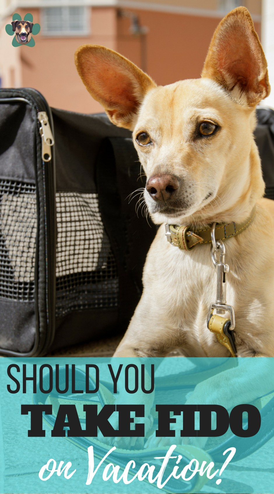 Summer is fast approaching. Are you planning some awesome Summer getaways? Do you plan on taking your pupper? There is a lot to consider when bringing your dog along for the ride. Before you start packing, here are some answers to the question,