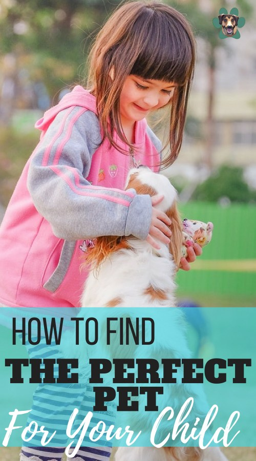 No doubt, bringing a pet home for your child can be a super exciting experience for them. But deciding to bring home a pet is a big one that you should not take lightly. Pets will help your child will responsibility and friendship. So, how do your make the right decision on choosing a pet for your child?