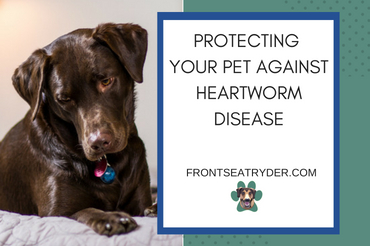 Protecting Your Pet Against Heartworm Disease: All You Need to Know