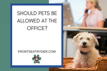 Bringing Pets to the Office: Right or Wrong for Psychological Wellbeing?