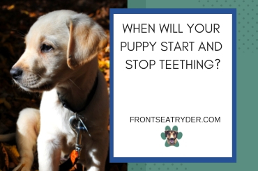 When will your puppy start and stop teething?