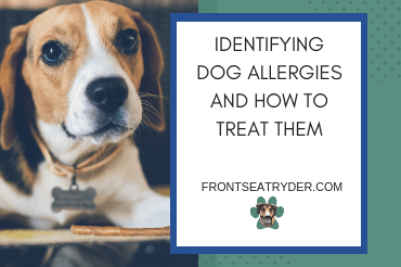 Identifying Dog Allergies and How To Treat Them