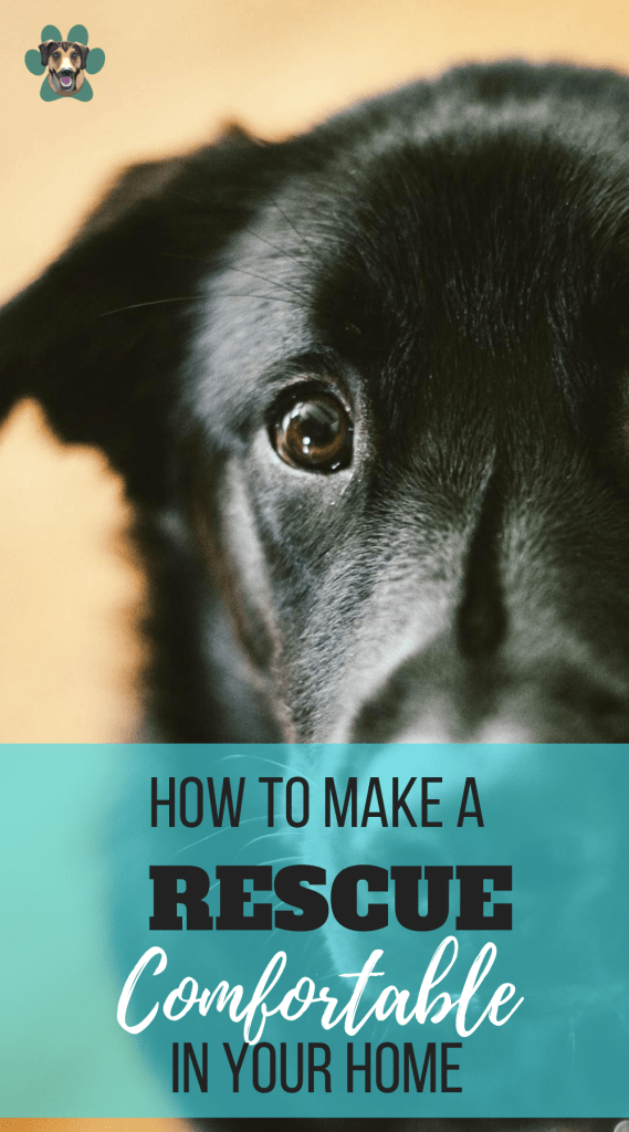 HOW TO MAKE A RESCUE COMFORTABLE IN YOUR HOME
