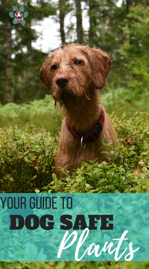 Your Guide About Dog Safe Plants