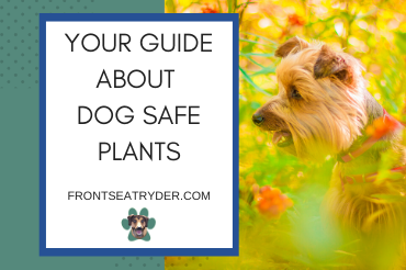 Your Guide About Dog Safe Plants: Your Pet Will Be Thankful!