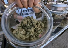 FILE - This Saturday, Nov. 11, 2017 file photo shows one of an assortment of marijuana strains during the High Times Harvest Cup in San Bernardino, Calif. On Wednesday, Dec. 6, 2017, the Los Angeles City Council is expected to consider a dense set of regulations that will dictate where pot can be grown and sold in the new market, along with how businesses will be licensed in L.A. (AP Photo/Richard Vogel, File)