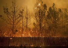 Flames climb trees as the Camp Fire tears through Paradise, Calif., on Thursday, Nov. 8, 2018. (AP Photo/Noah Berger, File)