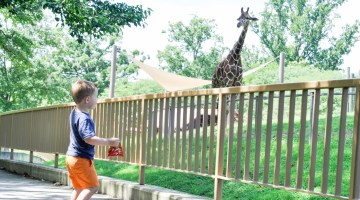 Things to do in Baltimore Maryland Zoo fun for kids Free Zoo Pass FritoLay mommy blog frostedevents.com @frostedevents