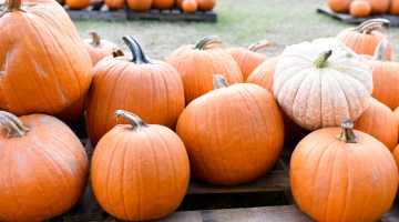 Pumpkin farm near me - Pumpkin patch ideas