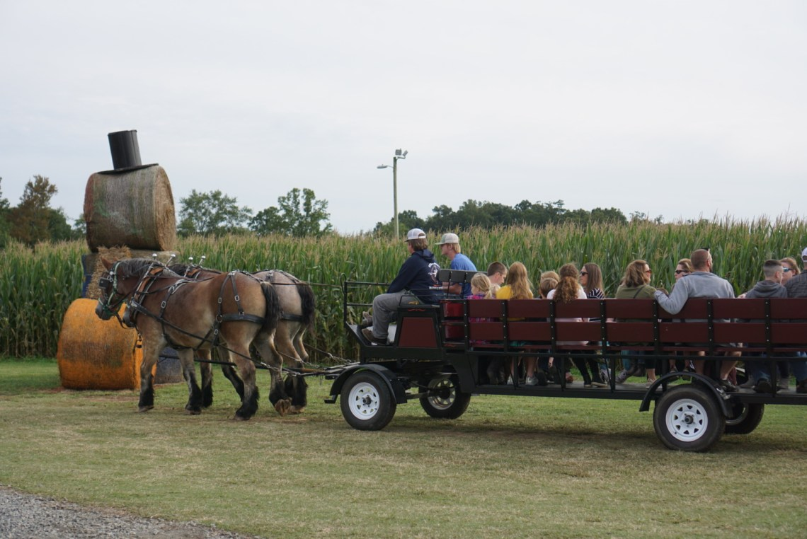 Corn Mazes in NC - Pumpkin Patches and Fall Things to Do - North Carolina - Alpha and Omega - hayrides