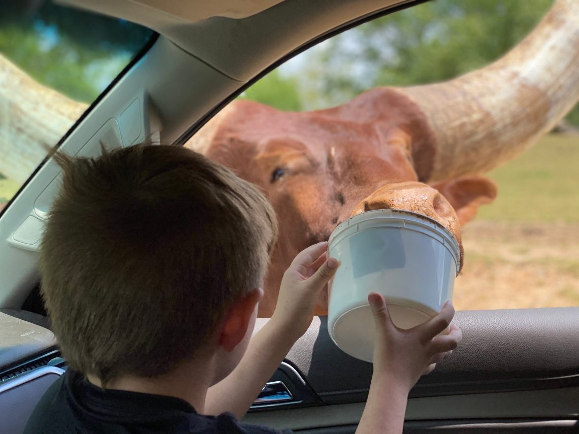 Lazy 5 Ranch - Drive Through Zoo in Mooresville NC - Things to Do With Kids- Day Trips and Family Travel in North Carolina feed animals