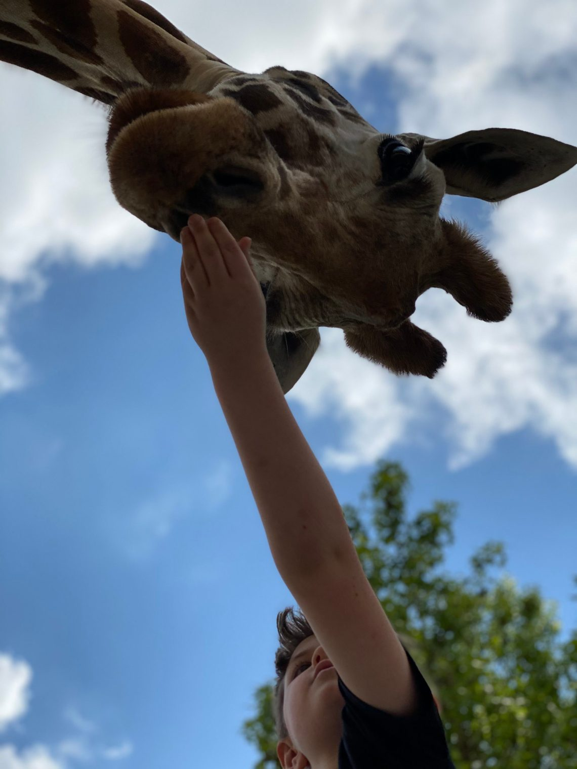 Lazy 5 Ranch - Drive Through Zoo in Mooresville NC - Things to Do With Kids- Day Trips and Family Travel in North Carolina