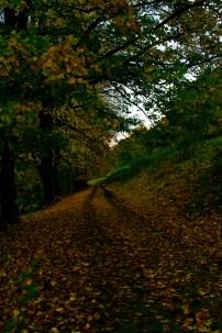 81.autumn path