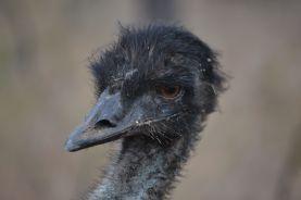 9.emu