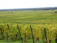 How the route de vins gets its name