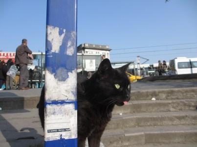 black cat on the Galata Bridge, Istanbul