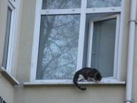 Cat on a window sill, Istanbul