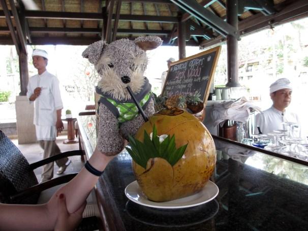 Buddy enjoying his coconut drink in Bali