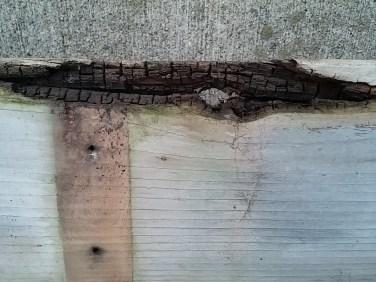 rottenboard2