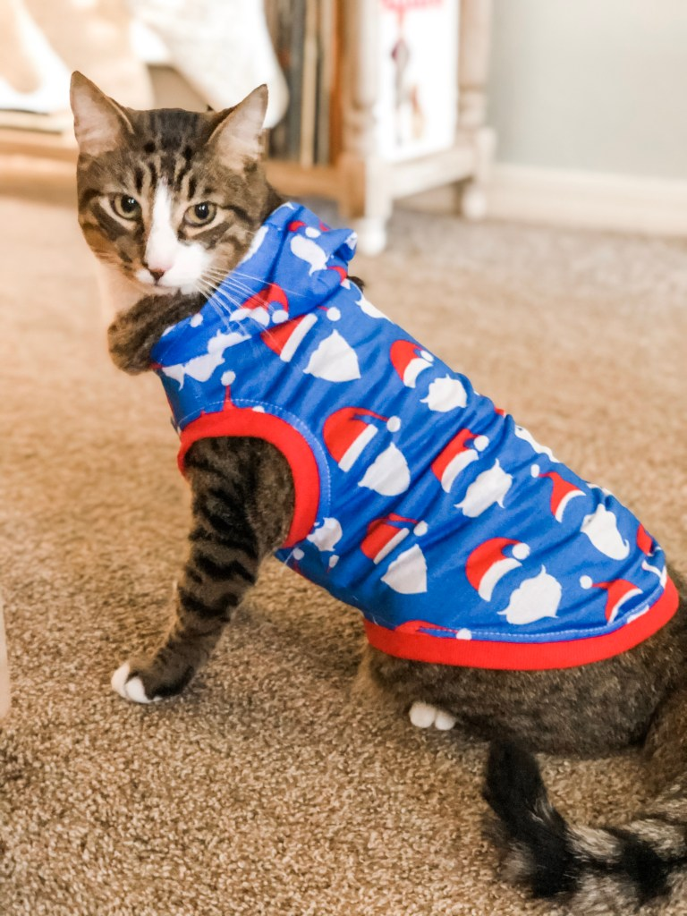 Cat in Christmas pajamas - 20 Christmas Traditions Your Kids Will Remember When They're Older