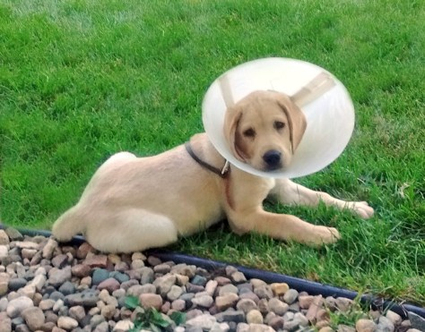 Chance in his cone.