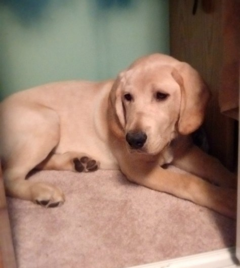 Chance seems to like the closet (folk's house - I would never pick that color!)