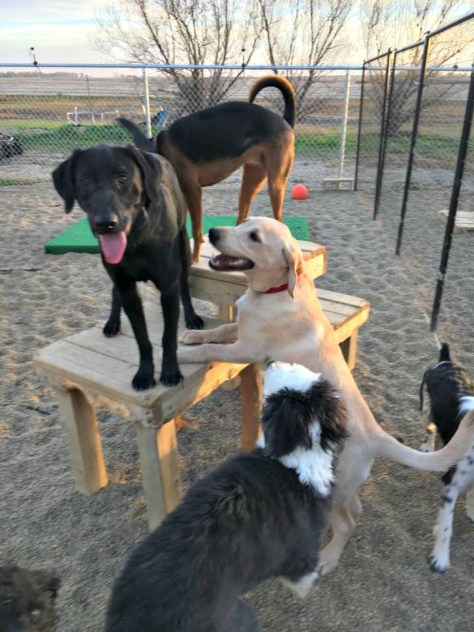 Chance at Doggie Daycare at Smoken Dakota Kennel
