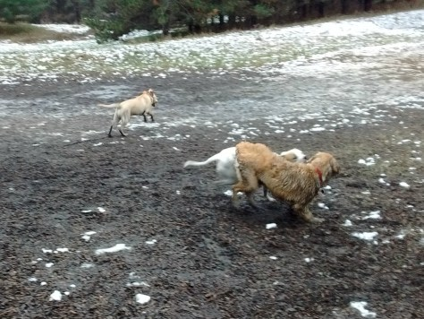 Chance is the dirtiest dog, of course, in front!