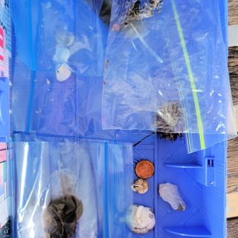 """treasure box with bird eggs, feathers, snake skin & other """"stuff"""""""