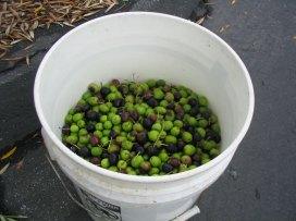 olives_3