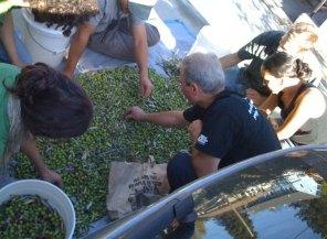 olives_4