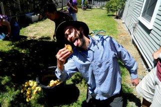 pear-harvest_3