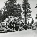 Five Logging Trucks With Lumber in Tow in the Forest on a Logging Road in Black and White Image