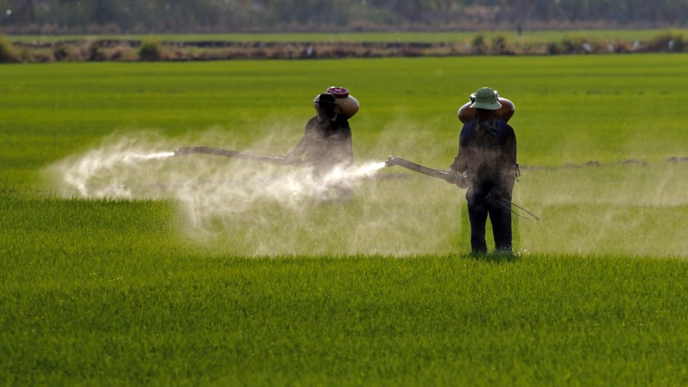 Pesticide Application on Field With Two Workers on the Ground
