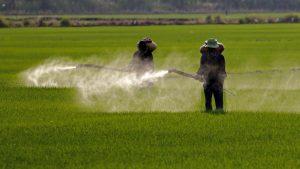 Workers Applying Pesticide in Fields