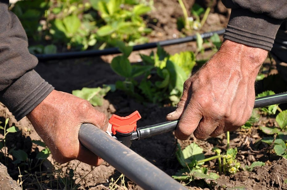 Close-up of a Man's Hand on Drip Irrigation System