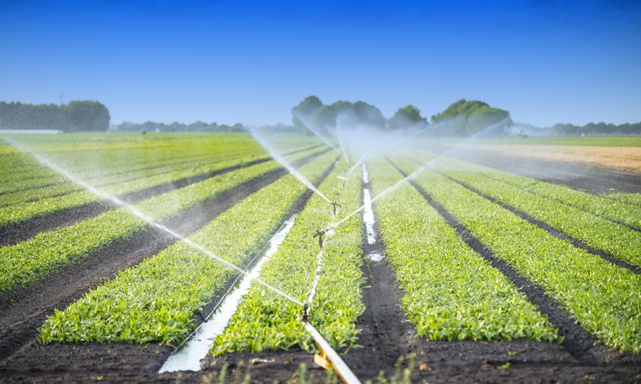 Watering Crops in a Field Irrigation System Short Crops