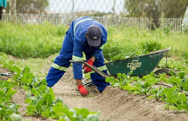 Man planting seeds in soi