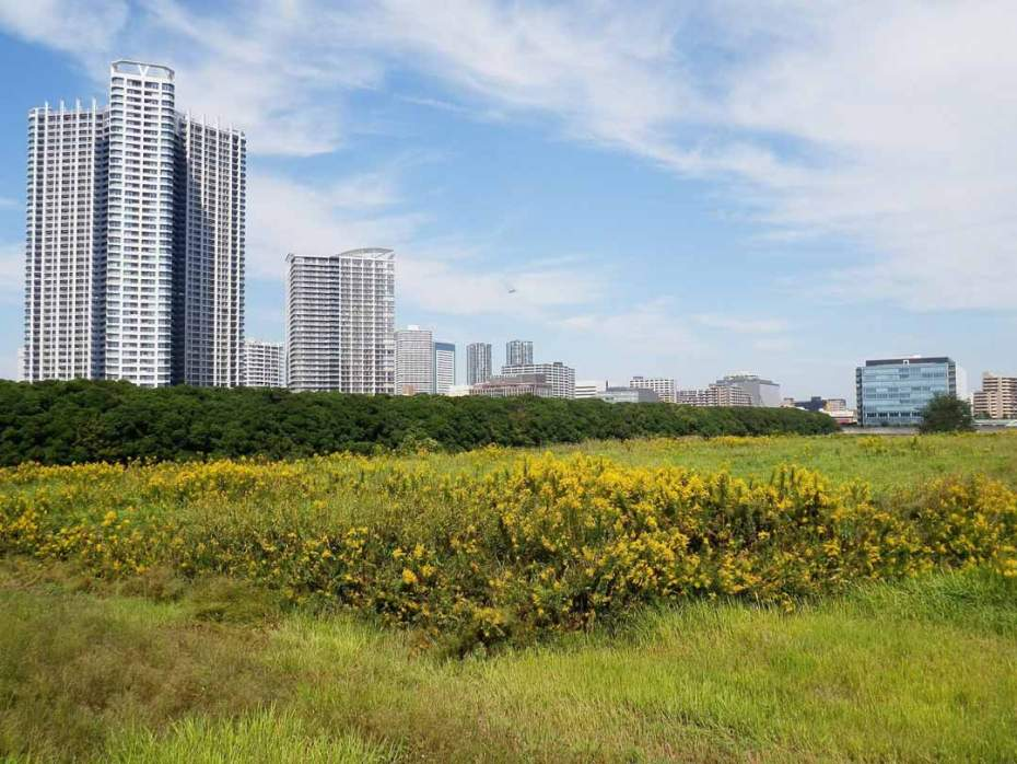 Vacant land with skyscrapers in the background.