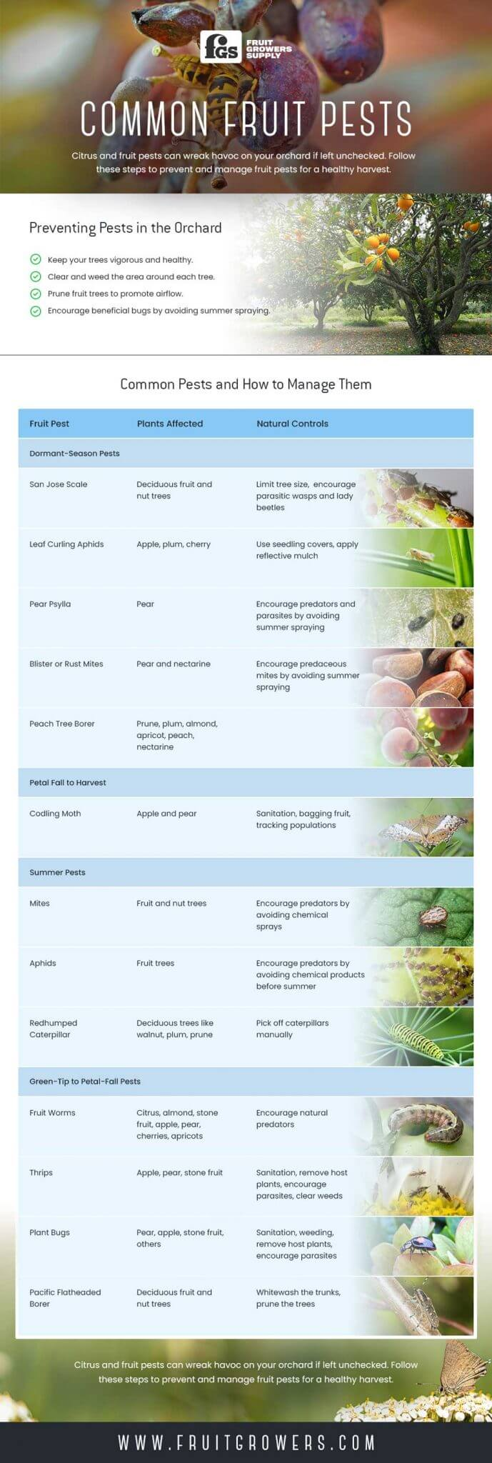 The Most Common Fruit Pests, And How To Handle Them - Infographic