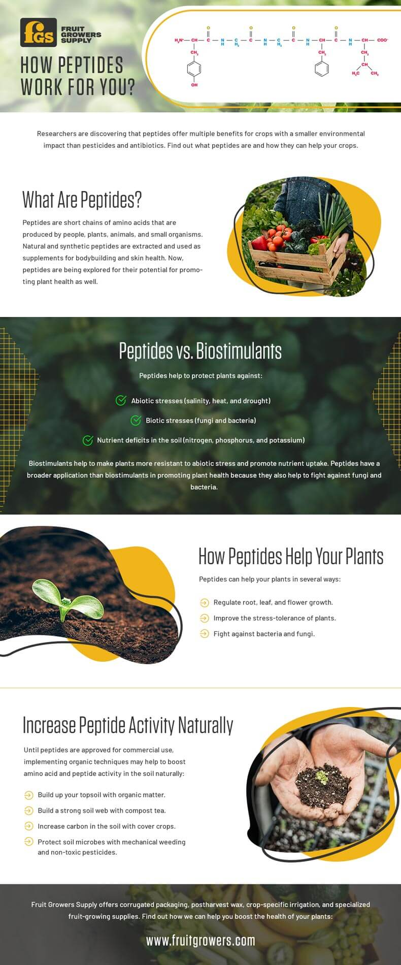 How Peptides Work for you - Infographic
