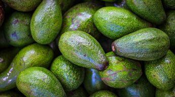 Green uncut California avocados