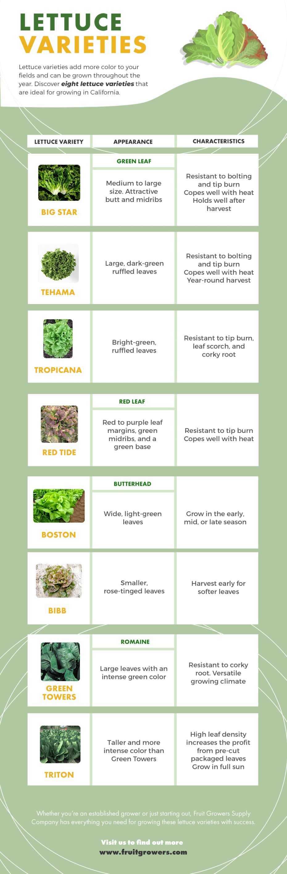The FGS Guide to Lettuce Varieties