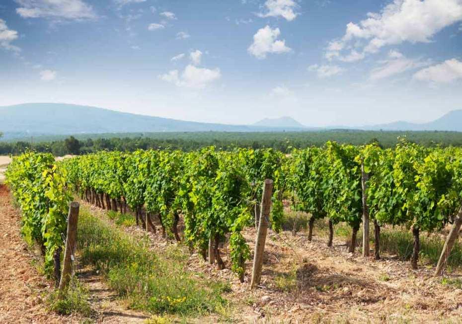 A Landscape of vineyard