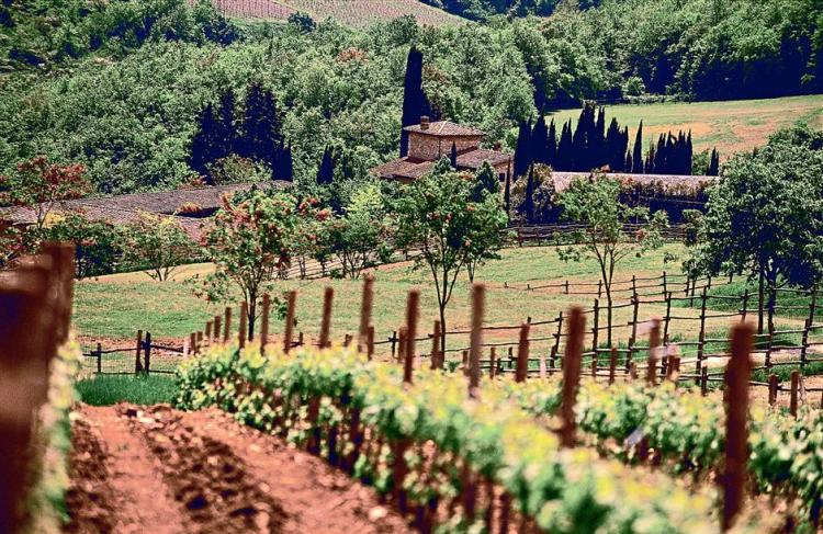 Виноградники Валенсии