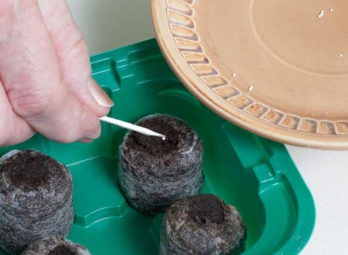 Выращивание рассады картофеля в торфяных таблетках